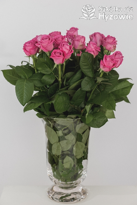 róże cięte ABC ze Szkółki róż Hyżowie